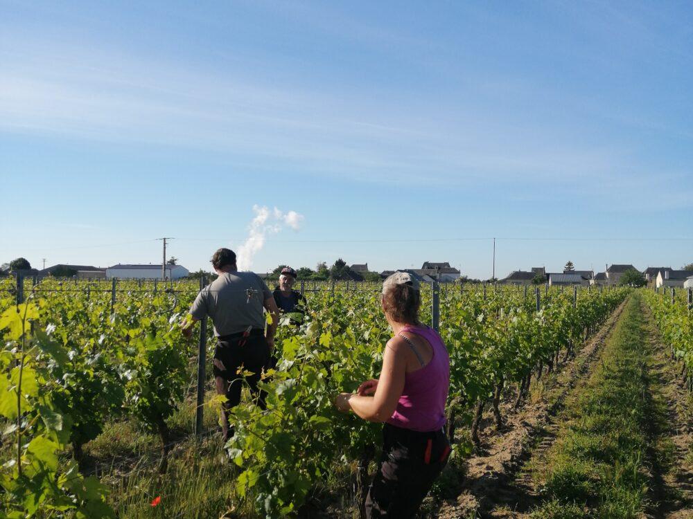 Travaux en Vignes